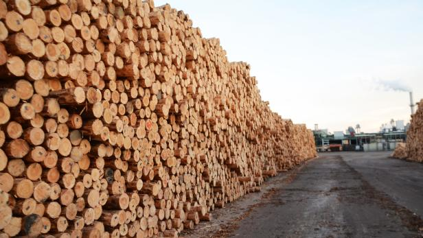 Sägewerk Radauti: Wo stammt das Holz her, das hier lagert?