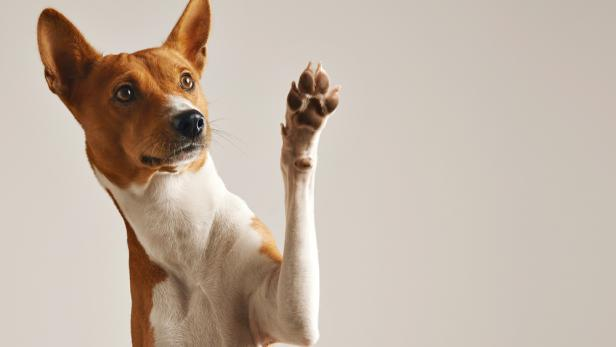 Hundehalter sind oft nicht in der Lage, die Signale ihres Vierbeiners richtig zu deuten