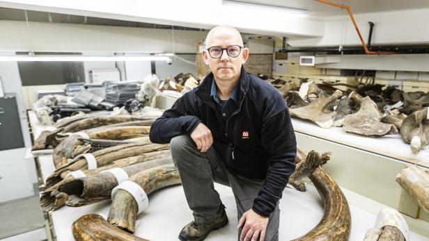 """Paläontologe Wooller: """"Es ist die bei Weitem größte und umfassendste Studie dieser Art."""""""