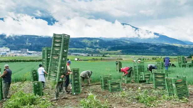Erntearbeiter:innen in Thaur, Tirol